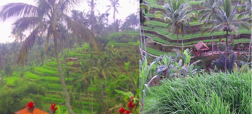 ubud bali - the bali channel